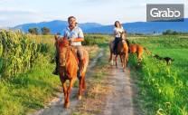 Забавление край Пловдив! Урок по конна езда или разходка с кон - за