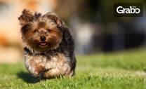 Къпане, разресване и изсушаване на куче